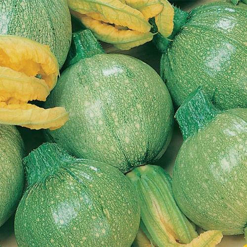COURGETTE TONDO CHIARO DI NIZZA Pack King/'s graines potagères