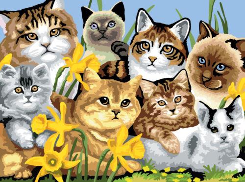Malen nach Zahlen Katzen