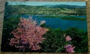 Vintage-Color-Photo-Postcard-Red-Buds-of-Lake-County-Clear-Lake-CA-VG-CND