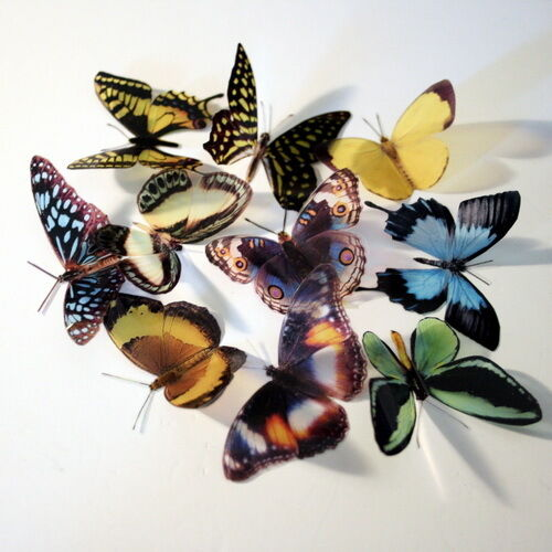6 Pk Mixed Australian Natural Artificial 3D Butterflies