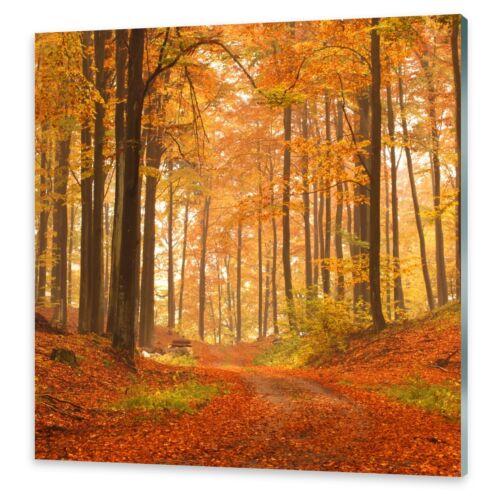 Glasbilder Wandbild Druck auf Glas Herbstwald