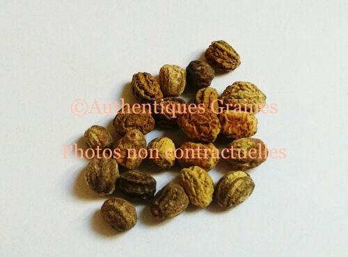 5//40 Seeds Nasturtium Velvety Deep Red Black Flowers Edible