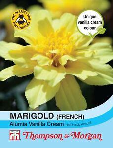 Afro francese Thompson /& Morgan-Fiore-Calendula Konstance 100 Semi