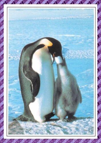 Pingouin Carte Postale