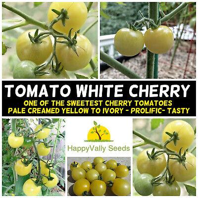 TOMATO White Beauty 15 Seeds HEIRLOOM vegetable garden spring summer veggie EASY
