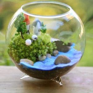Clear Glass Vase Flower Plants Pot Terrarium Container Mini Fish