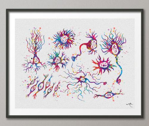 Neuron Types Art Watercolor Print Motor Medical Art Neurologist Cabinet Office