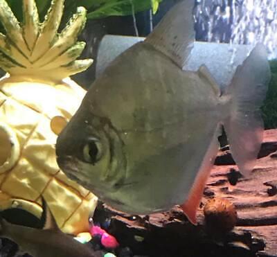 aquariumsupplieseverythingelse