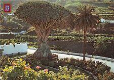 BG27677 icod de los vinos tenerife frago milenario spain