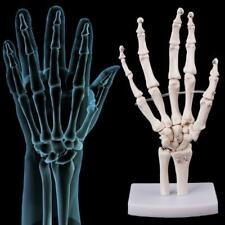 Hand Joint Anatomical Skeleton Model Human Medical Anatomy Study Tool Life Size