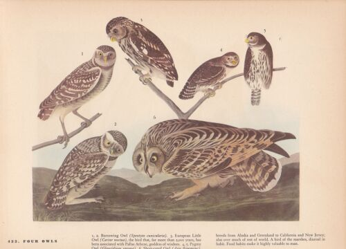 "1942 Vintage AUDUBON BIRDS #432 /""4 OWLS/"" FABULOUS Color Art Plate Lithograph"