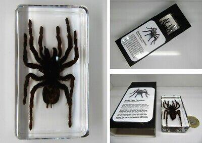 SCORPION Figurine@CRYSTAL Glass SPIDER@UNIQUE Collectable Gift@ARACHNID KILLER