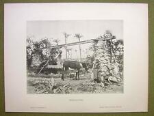 AFRICA Field Irrigation in Sudan Donkey Local Boy - 1880s Photogravure Print