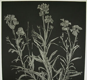 Andre-Barancy-c1970-Print-Original-Signed-EA-EP-039-Artist-Flowers-Of-Champs