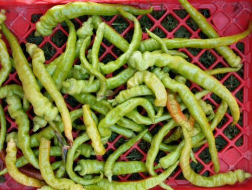 Balkan Peperoni Feferona mild perfekt zum Einlegen 5 Samen