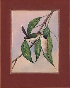Indiano-Sarto-Uccello-Miniatura-Pittura-Fatto-a-Mano-Etnico-Ornitologia-Natura