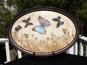 Essiccato-Iridescente-Farfalle-Fiori-Ovale-Cassettiera-Vassoio-Morpho-Brasile