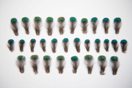 Faisán natural muy pequeñas plumas del cuello 1-2cm Azul//Verde Iridiscente-ética