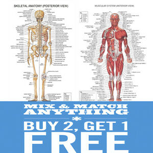 A2 Human ANATOMY Muscular Skeletal Student Medical Posters Prints ...