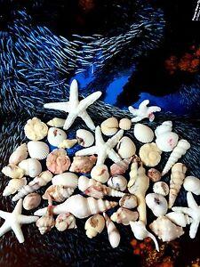 Image Is Loading Sea Shells Edible Sugar Cake Cupcake Topper Ocean