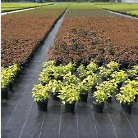 20 Year Landscape Weed Barrier Ground Cover With Planting Holes 3.0oz
