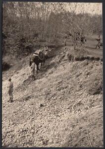 YZ3658-Fossano-1939-Militari-Mulo-trasporta-ruote-Fotografia-epoca-Photo