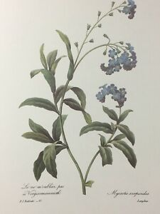 P.J. Redoute Print Forget Me Nots #81 The Most Beautiful Flowers Bookplate