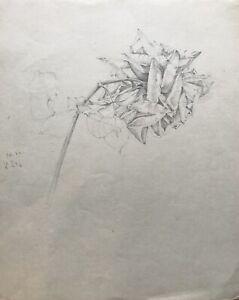 Lapiz-dibujo-prospero-Rose-naturaleza-estudio-firmado-25-0-x-31-0-cm