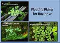 Floating Plants For Beginner, Frogbit, Dwarf Water Lettuce, Water Spangle.