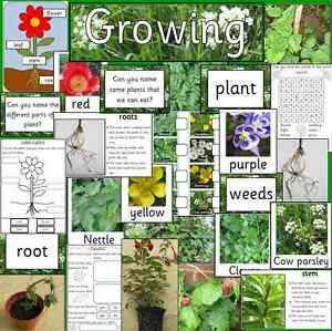 Growing Plants Teaching Resource Pack On Cd Science Spring Eyfs