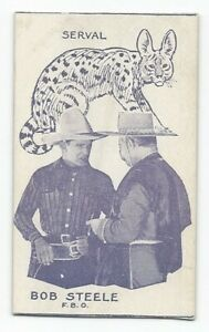 Rare 1920's Film Star & Animals Strip Card Bob Steele / Serval