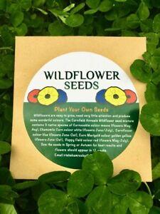 Wildflowers-of-Ireland-and-Britain-Cornfield-Annuals-Wildflower-seed-mixture