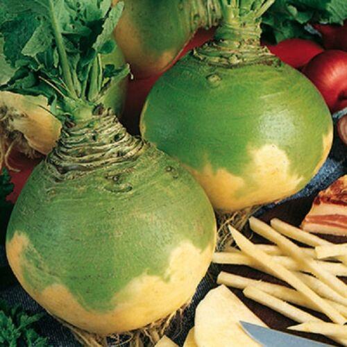 Swede Wilhelmsburger Ca Gemüse 500 Samen