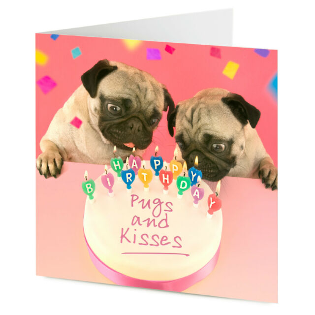 PUGS AND KISSES Two Pug Dogs Blow Out Candles On HAPPY BIRTHDAY Cake