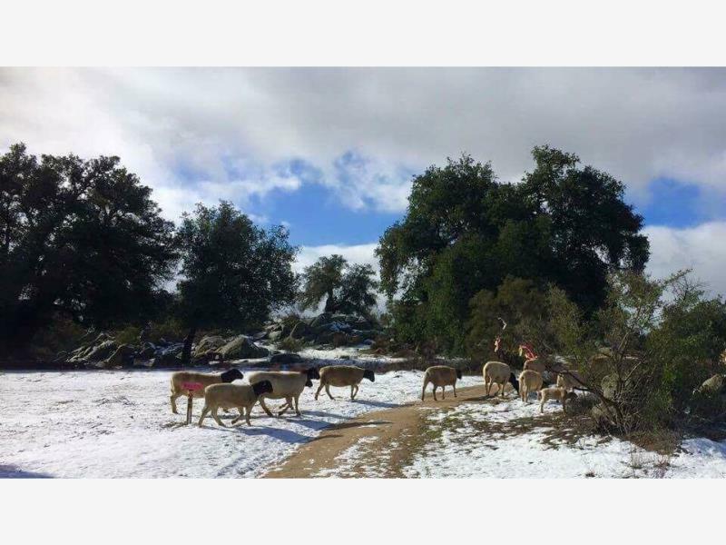 Finca/Rancho en Venta en Luis Echeverria Alvarez (el Hongo)