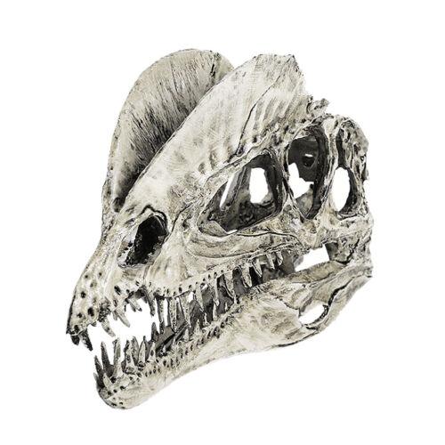 Skull Resin Animal Model Dinosaur Collectibles Replica Aquarium Ornament