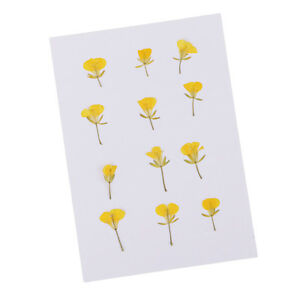 12-Pieces-Pressed-Flowers-Dried-Real-Rape-Flowers-DIY-Card-Making-Art-Crafts
