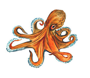 JELLYFISH Vinyl Decal Sticker Window Wall Bumper Macbook Squid Octopus Black