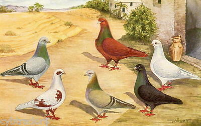 Four Color Jacobin Pigeons  Refrigerator Tool Box Magnet  Postcard Size