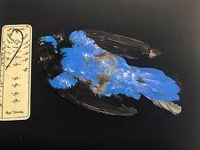 FAIRY BLUEBIRD TAXIDERMY BIRD SKIN  SALMON FLY TYING FISHING
