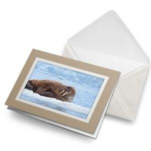 Greetings-Card-Biege-Wild-Walrus-Snow-Arctic-North-Pole-Animal-24403