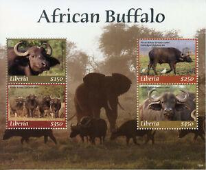 Liberia 2019 Neuf Sans Charnière African Buffalo 4 V M/s Oiseaux éléphants Animaux Sauvages Timbres-afficher Le Titre D'origine La DernièRe Mode