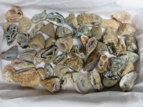Natural Agate Oco 1 Lb Lots 50 Pieces Total Geodes Half Specimens Polished #7