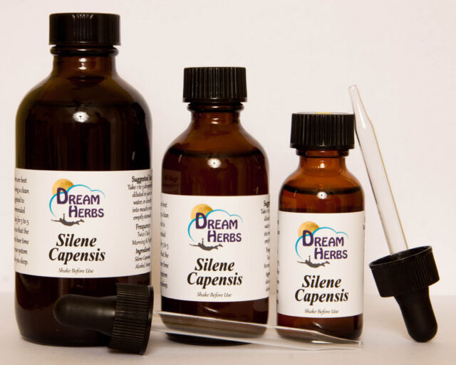 Silene Capensis (African Dream Root) Tincture (2 oz): Vivid & Lucid Dreaming DH
