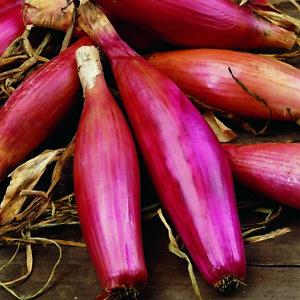 """(407) """"Rois de la qualité oignon long rouge FLORENCE 4000 Graines-Jardin Légumes-afficher le titre d`origine rzTwgvNm-07221234-932679183"""