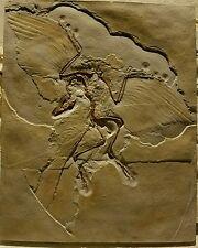 Archaeopteryx bird dinosaur fossil replica