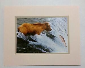 Eye-to-Eye-Jim-Stamates-Wildlife-Original-Fine-Art-Photograph-Matted-Signed