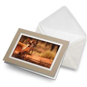 Greetings-Card-Biege-Kangaroo-Australia-Wild-Animal-Cute-8528