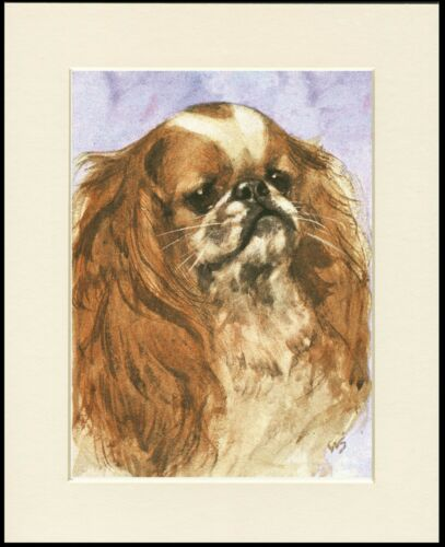 CAVALIER KING CHARLES SPANIEL HEAD STUDY LOVELY DOG PRINT READY MOUNTED