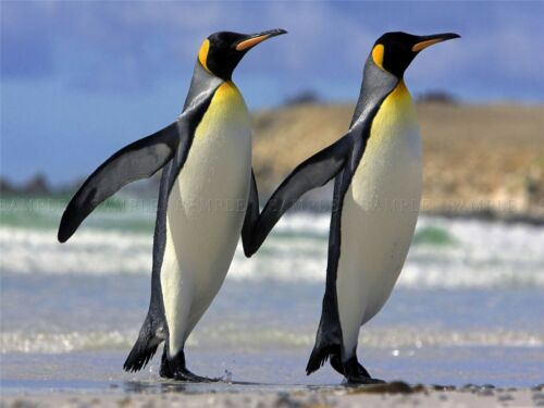 PHOTOGRAPHY ANIMAL PORTRAIT PAIR PENGUINS ICE COLD COOL ART PRINT POSTER MP3288A